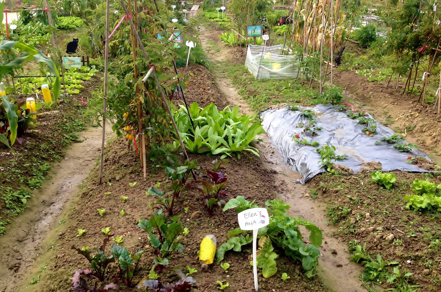 organic farm Connected to main campus by two trails through the campus forest, the organic farm is a working small-scale organic farm that serves as a learning laboratory focused on small-scale organic agriculture.