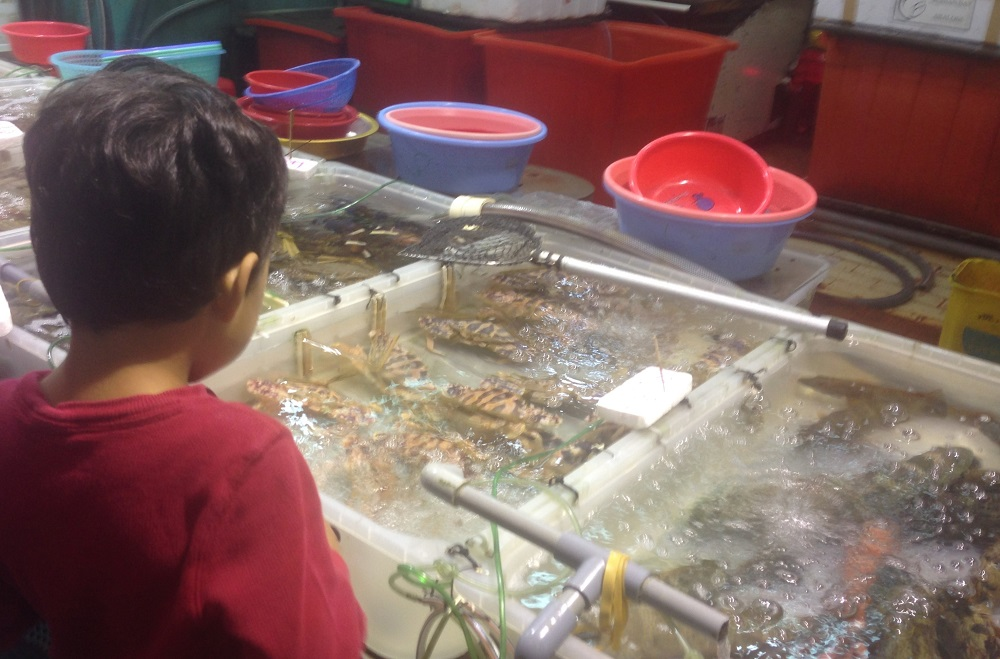 Fish stalls at North Point Ferry Pier, Hong Kong Island - on the way to Whampoa Garden